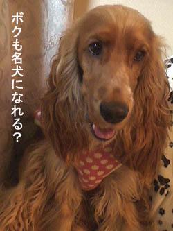 lassie2.jpg