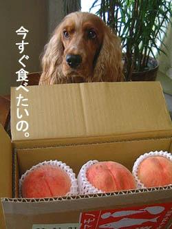 peachfromidog1.jpg