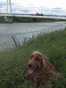 riverafterrain2.jpg