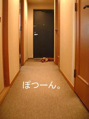 玄関だいすきなの~♪