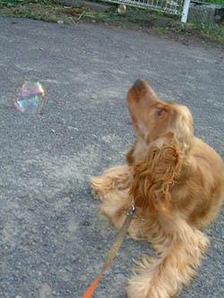 soapbubbles3.jpg