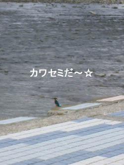 青い鳥だ!