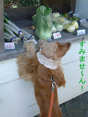 vegetableshop1.jpg