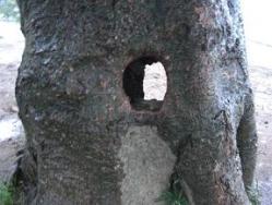 からっぽの木 3