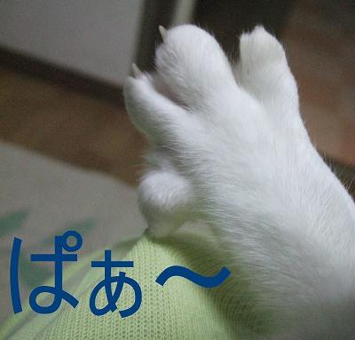2009_02260001.jpg