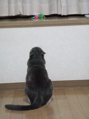 2009_05150001.jpg