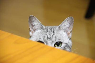 隠れてるつもり?