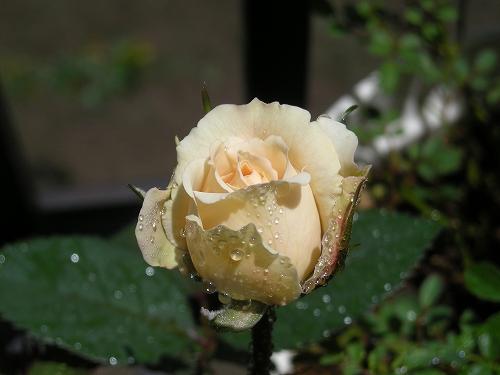 20080912-01