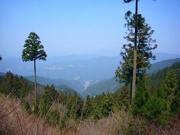 小田深山林用軌道9