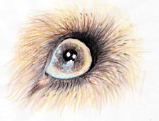 目・ノートリ