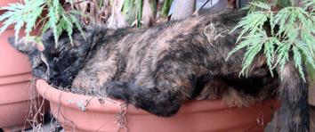 さび・植木鉢・寝姿・寝顔