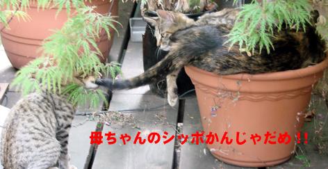 しっぽかんじゃだめ!!