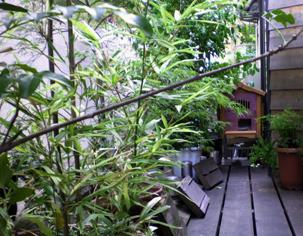 ジブリの小屋