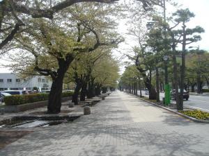 街路DSC00039