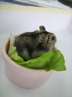 ポテト野菜座布団