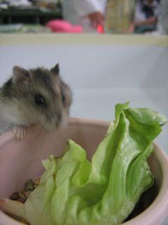 ポテト餌食べようとしてるんだけどボケてる・・・(これも部長の腕のせいです)