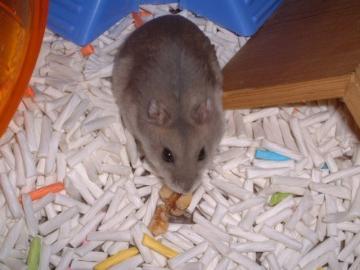 ノエルママ、クルミを食べています。