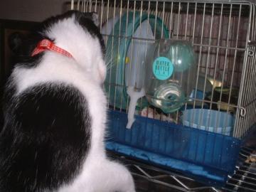 猫のピーちゃんとご対面