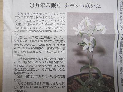 ナデシコ新聞