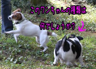IMG_4598_.jpg
