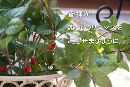 IMG_7319_20081222014535.jpg
