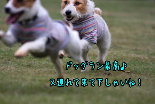 MG_6009.jpg