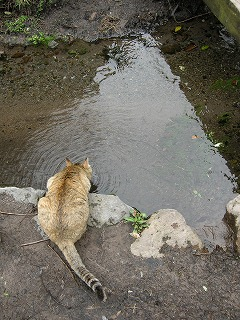 金鱗湖にゃんこ