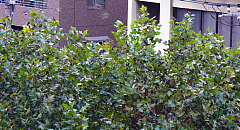 2006091901.jpg