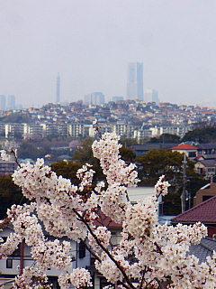 2007040177.jpg