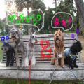 PA290552_2_convert_20081109034918.jpg