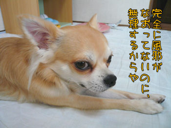 syasin_1025_004