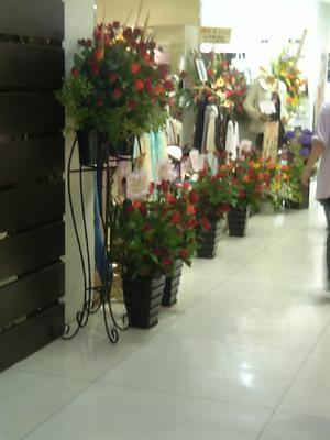 ダズリンのお花