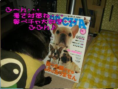 20070710012806.jpg