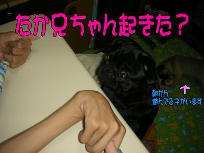 20070727014250.jpg