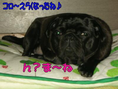 20070730015242.jpg