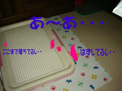 20070808202706.jpg