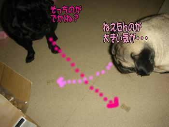 20071119234630.jpg