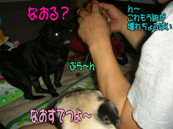 20071122230335.jpg
