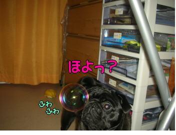 20071127011322.jpg