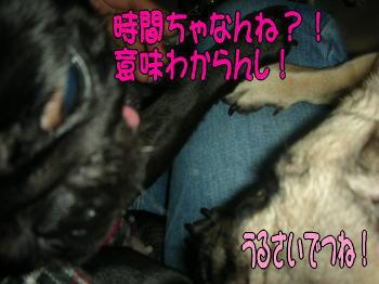 20071129032114.jpg