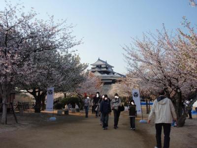天守閣と桜。