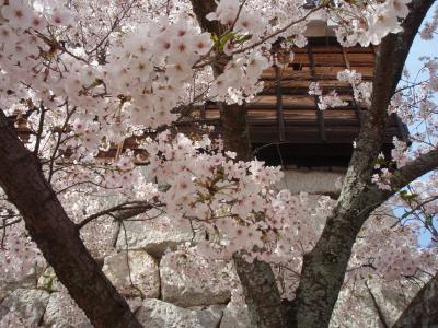 城と桜のハーモニ~
