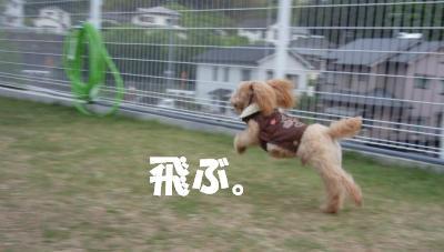 飛びます!飛びます!