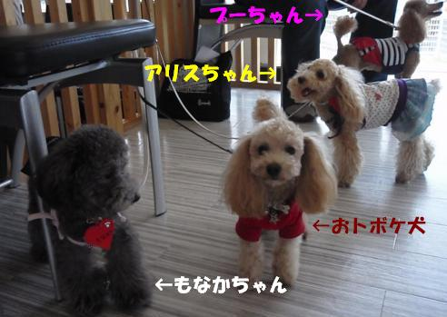 20090531-4dogs.jpg