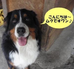 20090604-muku1.jpg