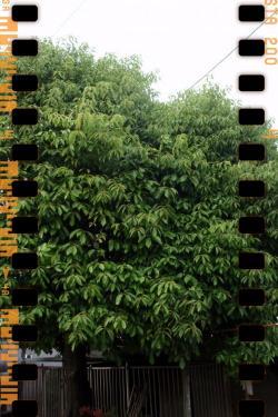 20090604-tree1.jpg