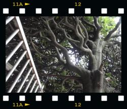 20090604-tree2.jpg
