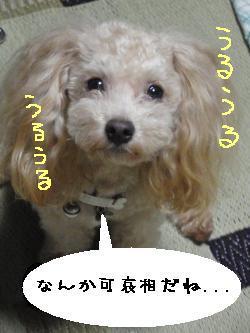 20090714-zeon2.jpg