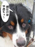 20090716-muku2.jpg