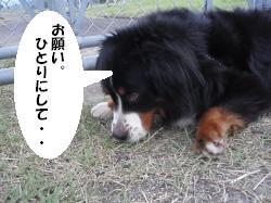 20090716-muku5.jpg